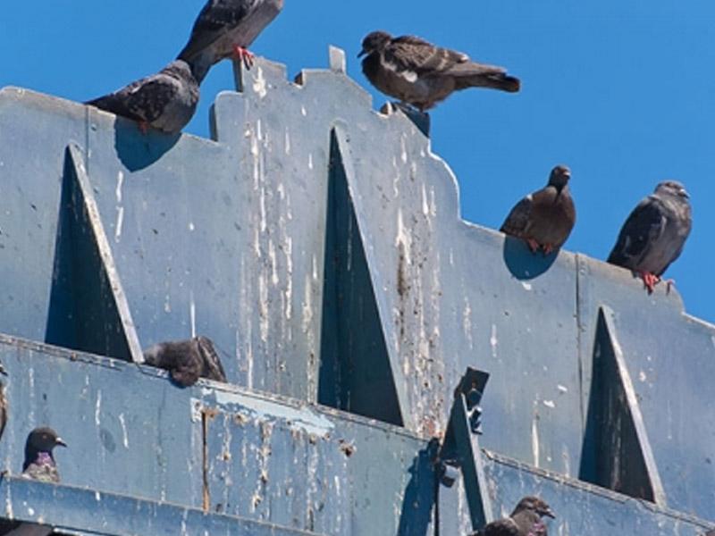 control de palomas en Hospitalet de Llobregat