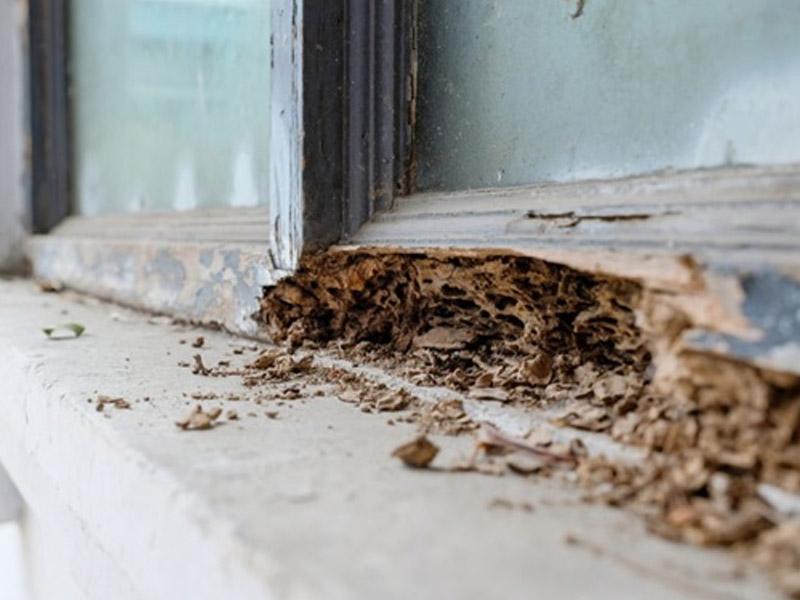 exterminacion de hormigas en barcelona