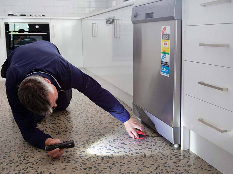 inspeccion control de plagas para particulares en Hospitalet de Llobregat