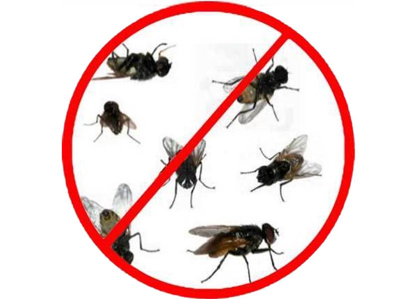exterminar moscas en barcelona plaga de moscas en barcelona