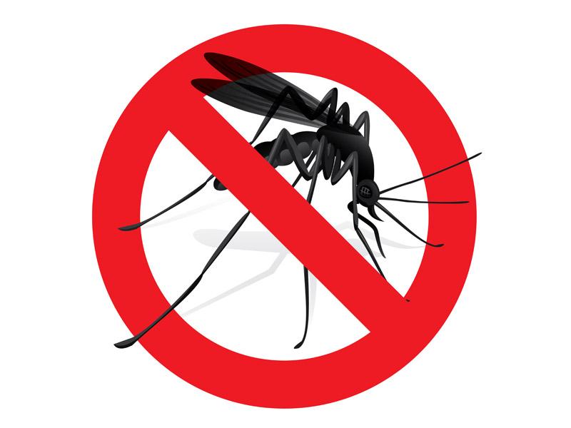 exterminador de mosquitos en barcelona control de plaga de mosquitos