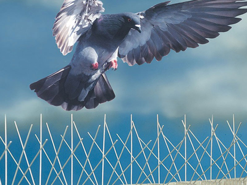 pinchos contra paloma en Hospitalet de Llobregat